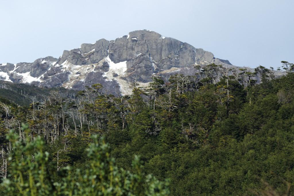 bosque y cerro